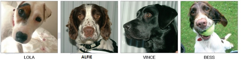 Sniffer Dog Team