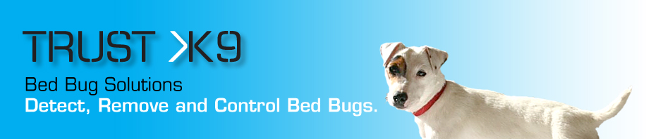 Where can I find Bed Bugs?